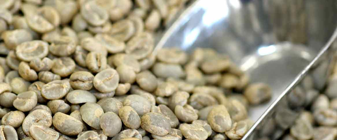 Green decaf Canterbury Coffee beans with silver scoop